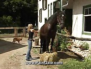 B-Horse-Cleaning Before Spanking