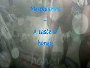 Maspalomas -2