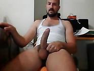 Portuguese Stallion