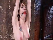 Jeze Belle In Hot Alt Girl In Brutal Bondage And Suffering - Hog