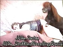 Zoofilia Cavalo Transando Com Dona De Casa