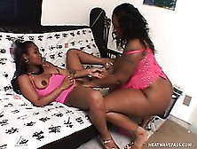 Busty Black Lesbians Hook Up On The Bed And Drive Each Other's C