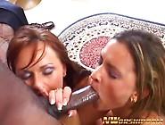 Babes Sucks Black Dick