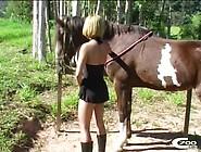 Video De Zoofilia Novinha Transando Com Cavalo Na Fazenda