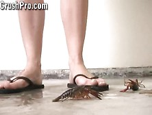 Ava Crush 17-Naked Flip Flop Crawadad