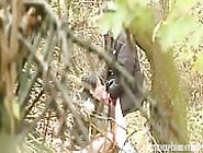 Voyeur Video Of Amateur Brunette Slut In Bushes Sucking Hard Coc