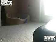Cachorro Engatado Gozando Dentro Da Mulher Em Zoofilia Amador