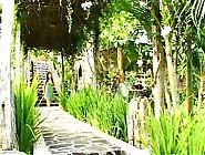 Irie Saaya - Garden