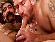 Hairy Bear Duo Sucking Cock Close Up