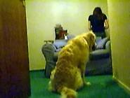 Caiu Na Net,  Novinha De Quatro Dando Para Cachorro