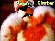 Kandi & Sherbet Fursuit Yiff
