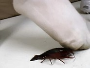 Jenny's Crushes Crawdads In Smelly,  Dirty Socks