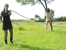 outdoor bullwhipping